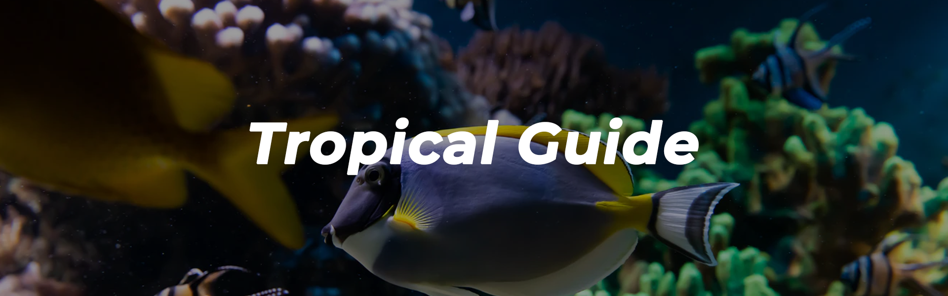 Tropical Guide Banner